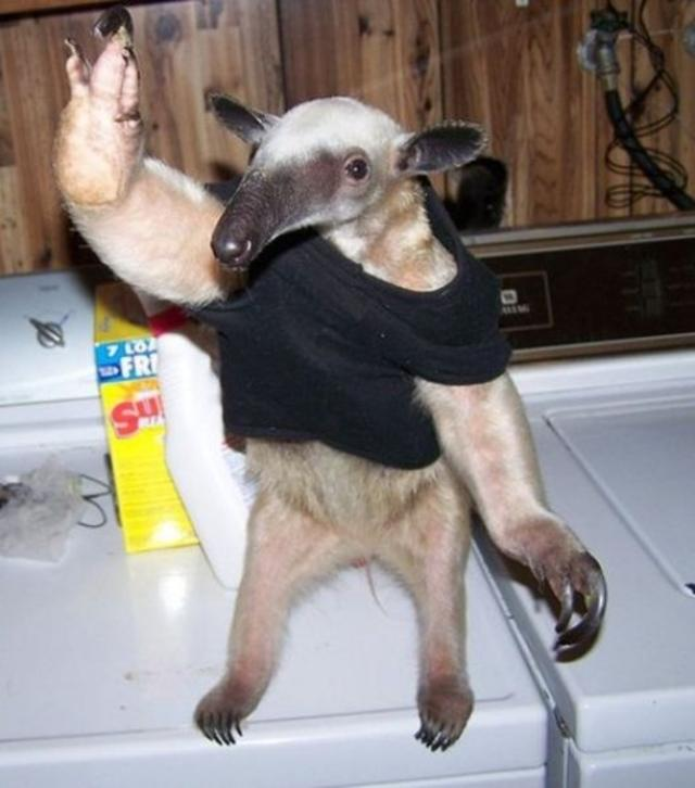 Hi, Mr Sloth!