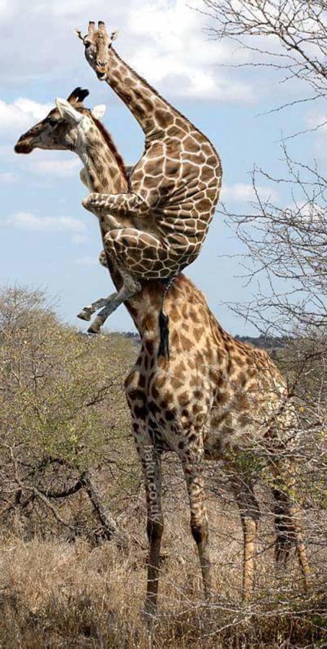 #animal #hug
