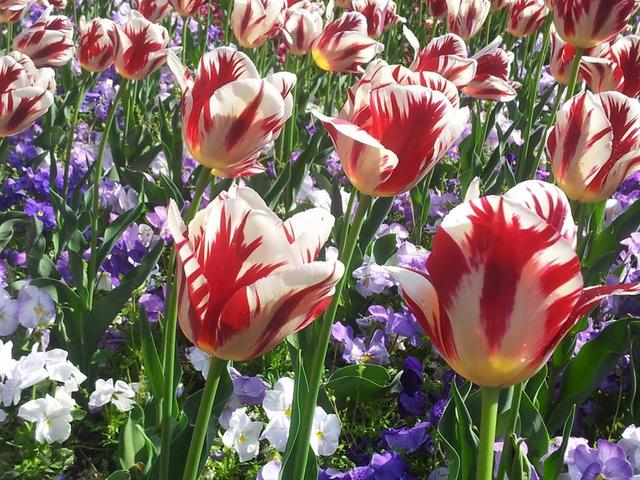 Proleće u Budimpešti