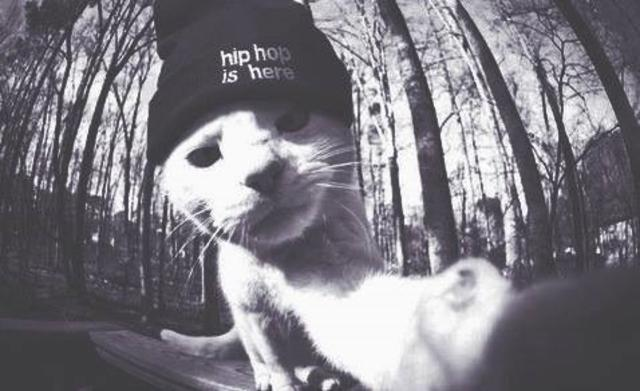 Hiphop Cat Trended Youtrendit