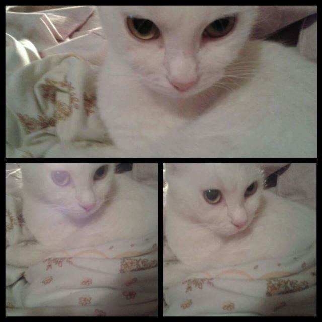 Cat beba moja
