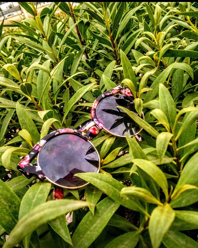 nature_glasses