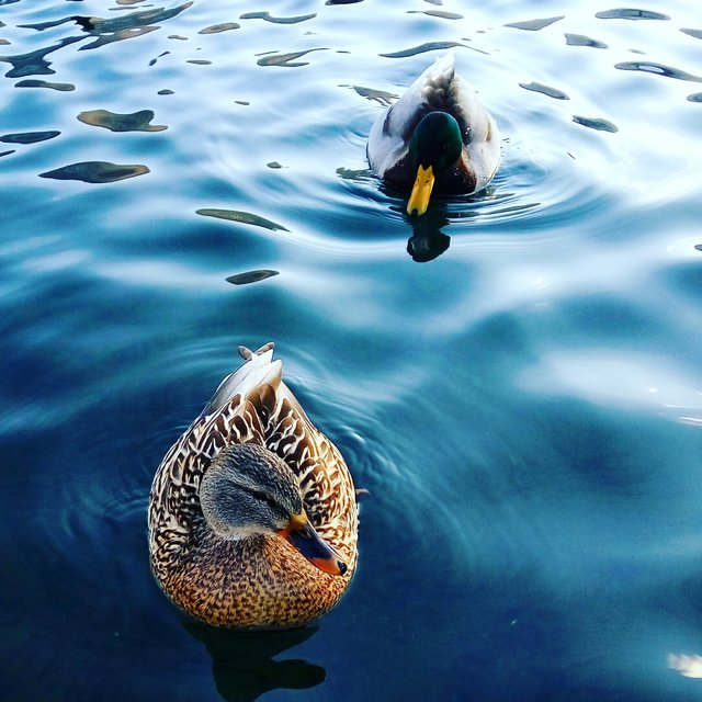 #jajce #pliva #lake