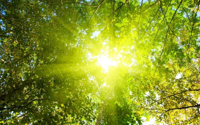 #sunshine #tree